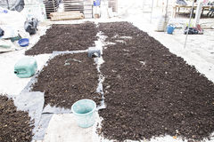 Manure pile. Pile of natural manure fertilizer made from cow excrement Royalty Free Stock Photo