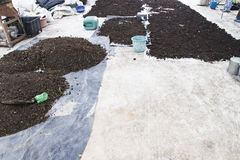 Manure pile. Pile of natural manure fertilizer made from cow excrement Stock Photo