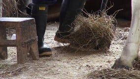 Manure, Poop, Fertilizer stock video