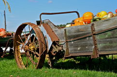 Manure spreader full of pumpkins Stock Photography