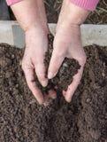 Manuring土壤用手在被种植的种子以后 库存照片