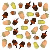 Many acorns Royalty Free Stock Photos