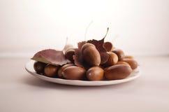Acorn. Many acorns laying on saucer Royalty Free Stock Image