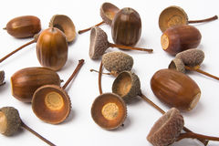 Many acorns and shells Stock Photos