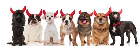 Many adorable devil dogs on white background. Many adorable devil dogs of different breeds standing and sitting on white background Stock Image