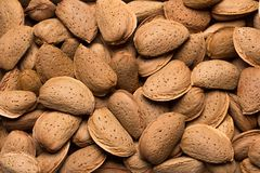 Many almonds as a background. A lot of almonds in the shell in the background Stock Image