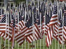 Many american flags. Planted in the grass Royalty Free Stock Photos