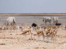 Many animals at waterhole Royalty Free Stock Photos