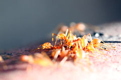 Many ants are walking on timber. Royalty Free Stock Photo
