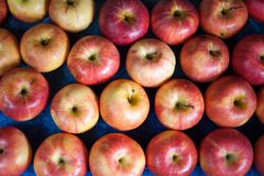 Many apples Royalty Free Stock Images