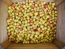 Many apples in wooden boxes Royalty Free Stock Photos