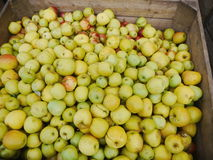 Many apples in wooden boxes Royalty Free Stock Images