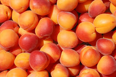 Many apricot Royalty Free Stock Images
