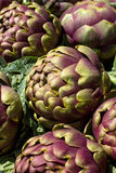 Many artichokes Royalty Free Stock Images