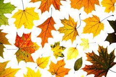 Many autumn leaves Royalty Free Stock Photos