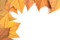 Many autumn leaves on a light background stock photos