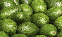 Many avocado Royalty Free Stock Images