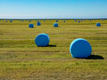 Many bales of hay covered with blue plastic Stock Photography
