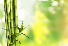 Many bamboo stalks on blurred background. Bamboo stalks green color white background vibrant Stock Photography
