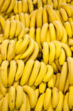 Many Bananas. Rows of ripe yellow bananas Royalty Free Stock Photography