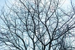 Many bare, dark leafless autumn tree branches making a graphical twigs silhouette up against the cold blue sky - Concept royalty free stock image