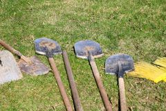 Many bayonet shovels with wooden handles, household equipment for cleaning, arrangement of territory, digging of the earth lie on. The green grass royalty free stock photo