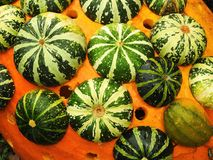 Different pumpkins pattern Royalty Free Stock Images