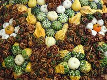 Different pumpkins and autumn leaves pattern Royalty Free Stock Image