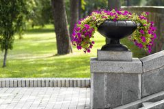 Many beautiful flowers growing and blooming in a big stone pot in park on summer sunny day. Green grass and trees background. Many beautiful flowers growing and Stock Photo