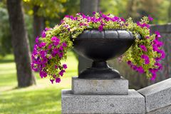 Many beautiful flowers growing and blooming in a big stone pot in park on summer sunny day. Green grass and trees background. Many beautiful flowers growing and Stock Images