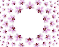Many beautiful fresh flowers of purple orchid Royalty Free Stock Photography