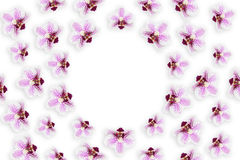 Many beautiful fresh flowers of purple orchid Stock Images