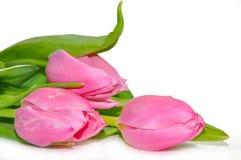 Many beautiful pink tulips Stock Photo