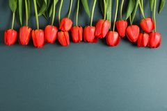 Many beautiful red tulips with green leaves on dark background. Space for text royalty free stock photo