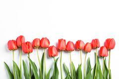 Free Many Beautiful Red Tulips With Green Leaves On White Background Royalty Free Stock Photography - 145791027