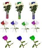 Many beautiful roses without background, flowers Roses isolated in large numbers. Sets flowers Stock Photos