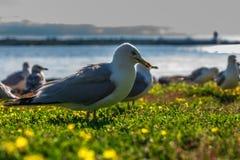 Many beautiful seagulls Stock Photo