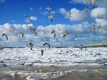Seagulls and Baltic sea in winter, Lithuania royalty free stock photography