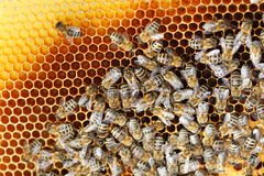 Many bees on beeswax Stock Images