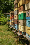 Many bees on beevives. A lot of bees on coloured beehives Royalty Free Stock Image