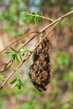 Many bees on branch Stock Photography