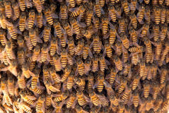 Many bees of bringing honey on honeycomb Stock Photos