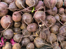 Many Beetroot Bulbs Royalty Free Stock Images
