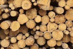 Many Big Pine Wood logs In Large Woodpile Background Texture Stock Photo