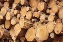 Many Big Pine Wood logs In Large Woodpile Background Texture Royalty Free Stock Image