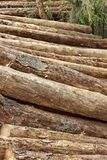 Many Big Pine Wood logs In Large Woodpile Background Texture Royalty Free Stock Images