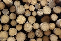 Many Big Pine Wood logs In Large Woodpile Background Texture Royalty Free Stock Photos