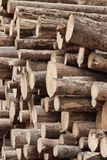 Many Big Pine Wood logs In Large Woodpile Background Texture Royalty Free Stock Photo