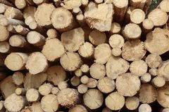 Many Big Pine Wood logs In Large Woodpile Background Texture Stock Photography