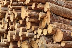 Many Big Pine Wood logs In Large Woodpile Background Texture Stock Photos